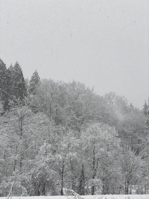大雪の中の現場